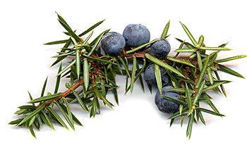 gin-berries-350
